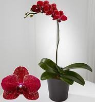 20% OffFlowers for Mother's day @ FTD