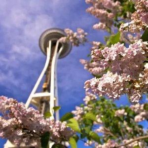 星级酒店 $132起西雅图四月赏樱花季酒店特惠