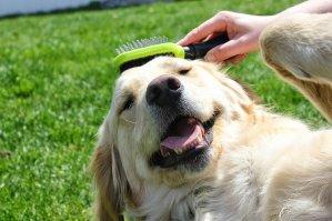 低至65折限今天:FURminator 动物毛发护理工具特卖