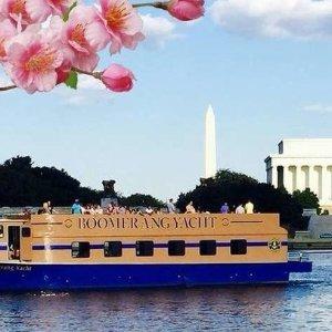 5折 $16华盛顿樱花观赏游船 1小时观光巡航